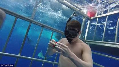 Tiburones, Cubo de Rubik, Kevin Hays