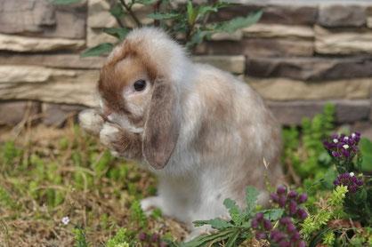 кролики тула Питомник весна
