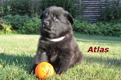 Atlas im Alter von 5 Wochen