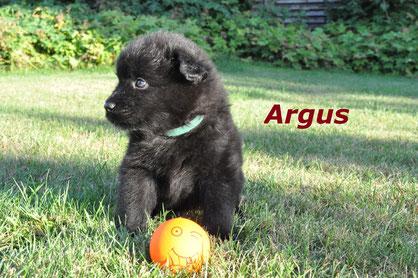 5 Monate alt, der süße Argus