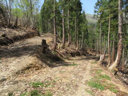林道をほぼ登りきった地点。