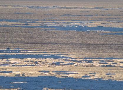 夕陽台から沖の流氷を望む。