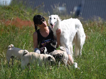 Pugs and Havaneses with Borzois and Deerhounds! Harmonious sightound breeding in Germany...von Alshamina....borzois and scottish Deerhounds/FCI.