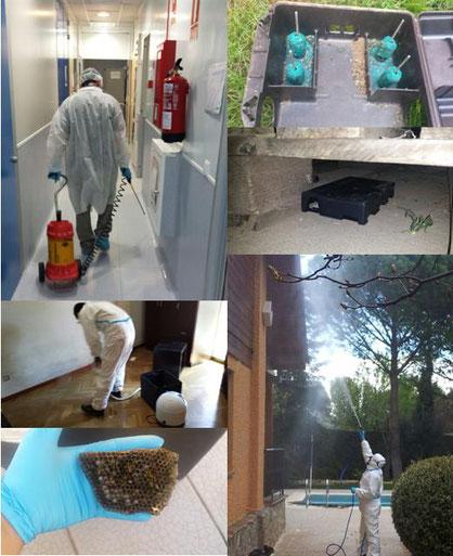 Control de ratas, ratones, avispas, cucarachas, hormigas, chinches, termitas, procesionaria, etc...