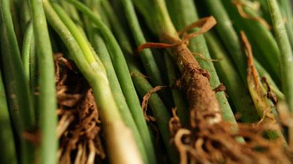 Frühlingszwiebel,Cebolinha,Spring onion,Gemüse,Legumes,Vegetables,Martins-Kulinarium,Carvoeiro,Algarve,Portugal