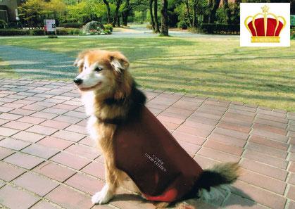 吉田 ひな(ミックス)【プラチナ認定犬】