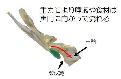 仰臥位での食材と唾液の流れ