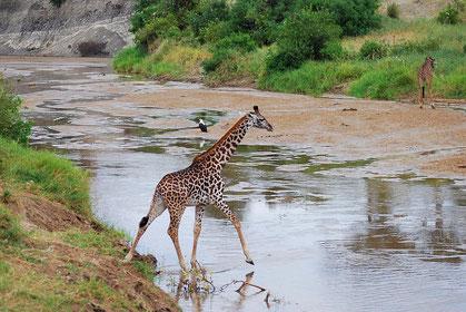 Tansania günstige Safari