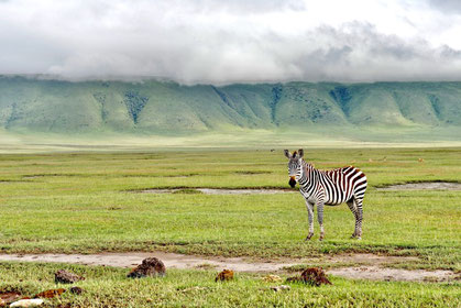 Affordable safari Lake Manyara Ngorongoro Crater