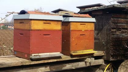 Beute mit Honigraum