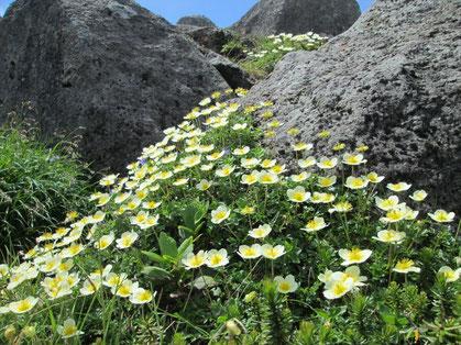 お花咲き誇る素敵な岩場