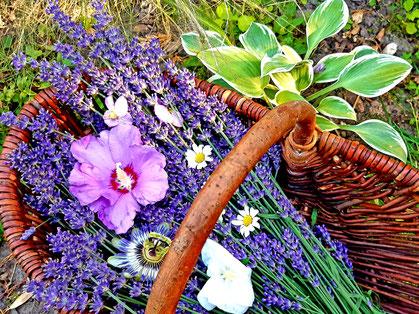 Bild mit Pflanzen der Aromatherapie