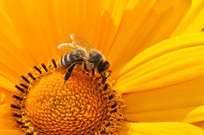 Ein Meter für Bienen (Petra Blume)