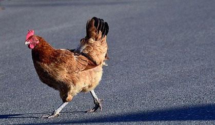 鳥も走る12月慌てる心に鍼灸を