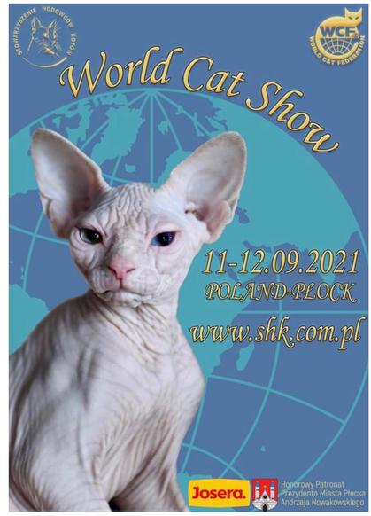 Sphynx, haarlose Katze (Qualzucht) als Werbeträger für eine WCF-Katzenausstellung in Polen - Europäische Union, World Cat Show, 2021