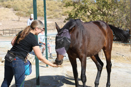 Rescue horse laying down with trainer