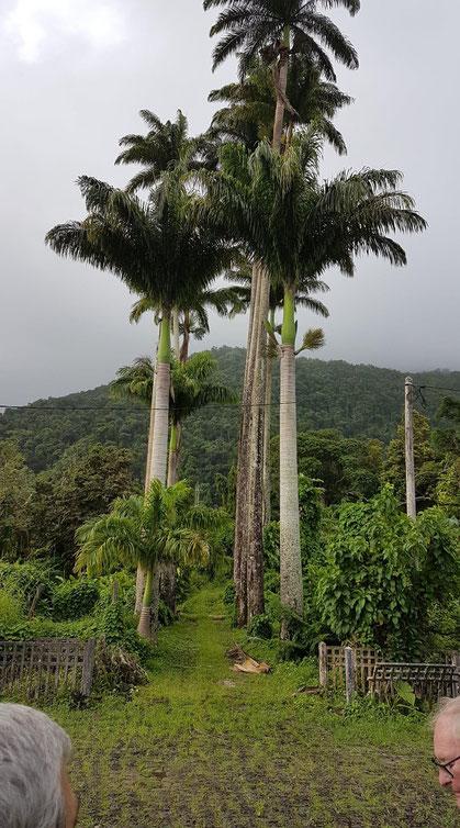 jardins, aux allées pavées bordés de palmiers royaux