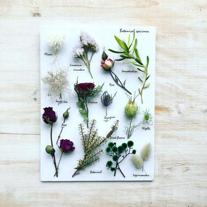 2018年7月 東京 表参道1dayレッスン『壁掛け 植物標本』作り