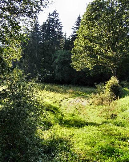 Waldweg im Hafenlohrtal