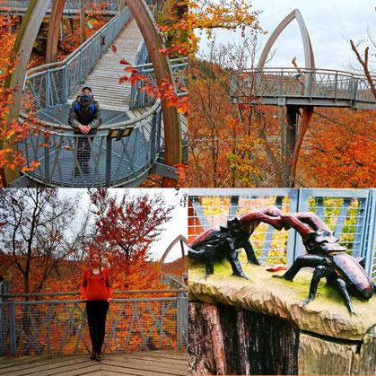Treetopwalk, Baumkronenweg, Eichhörnchen Pfad, Edersee, Erlebnisregion, Aktion mit Kind, Urlaub trotz Corona, Urlaub in Deutschland