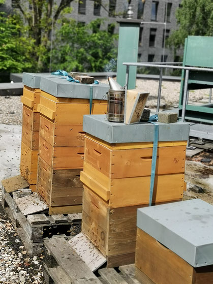 Bienenwohnungen versteckt im grünen Stadtgarten