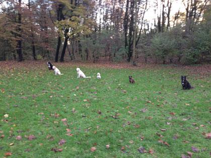 Hundetraining für Hundeführerschein. Bleib-Übung für sechs Hunde.
