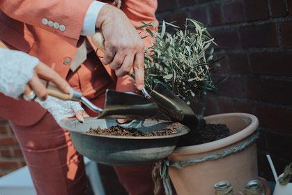 Freie Trauung Ritual Baum pflanzen Olivenbaum Hochzeit