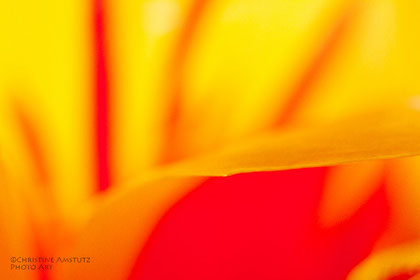 Tulpenblatt, einmal anders gesehen