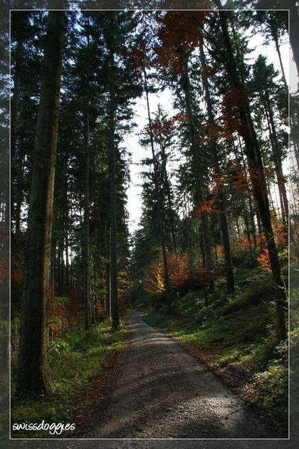 In diesem Wald gehen wir so gerne spazieren!!!