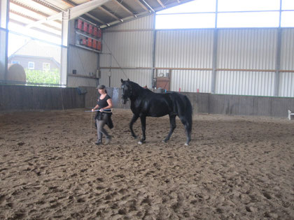 Rees, 1. September: Jungpferdetraining mit Fenja Täuber (Thomas Günther Pro-Ride) Don ist in der fremden Umgebung freundlich wie gewohnt, interessiert, angstfrei und kooperativ - einfach nur toll :-)