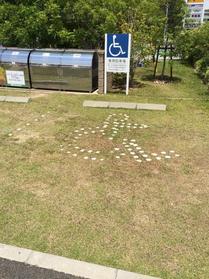 こちらの専用駐車場の生育状況はいい。使われる頻度とも関係が有りそうだ。
