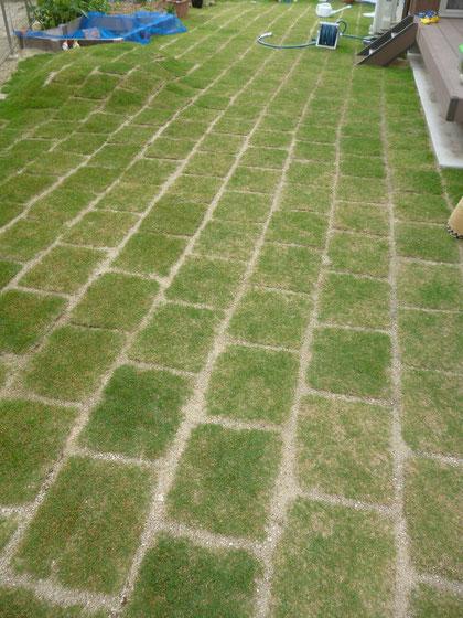 無事ぬかるみも無くなり緑が生えてきた芝生