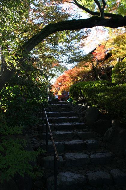 石造りの階段のところも秋らしい風景になっていました。