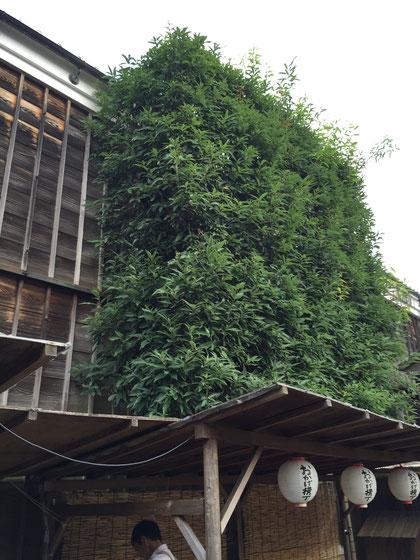 緑の壁の下は屋根がある?