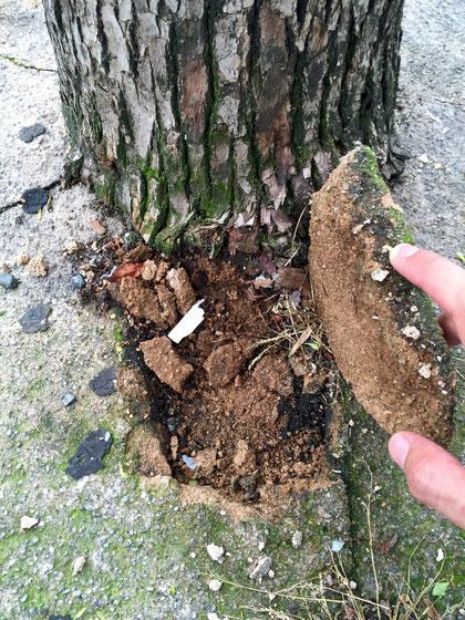 固まりになって取れていた舗装。固かったので、多分セメント成分は入っていると思われる。