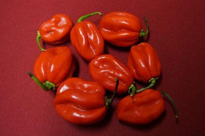 Habanero Chilis von Lovely, Sweet Chili