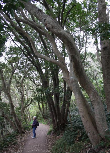 Sous les hauts eucalyptus sombres