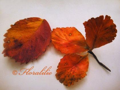 Herbstliche Erdbeerblätter von Floralilie - Floralilies Zucker-Seite!