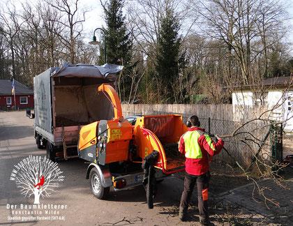 Baumpflege Havelland bei der Arbeit am Häcksler