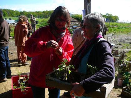 Les plantes, ça fait parler ! les échanges étaient nombreux autour des plantes et leurs caractéristiques (fonction, floraison, saveur, exposition, contraintes et avantages, etc)