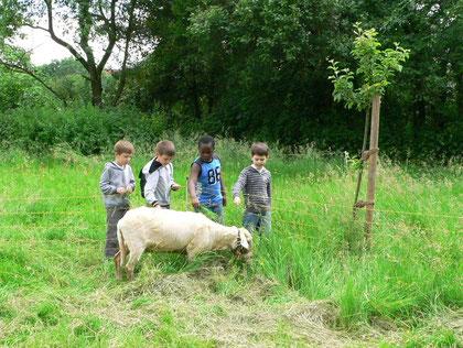 taze kırkılmış bir koyun :-)