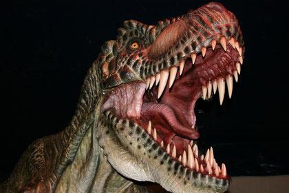 Représentation d'un Tyranosaure (Tyranosaurus rex)