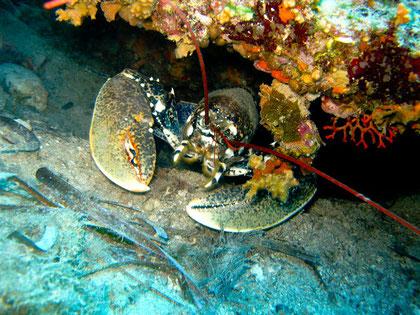 Scuba diving villefranche
