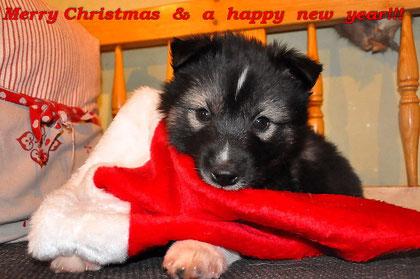 Q-Boll wünscht  frohes Wehnachtsmützenessen...