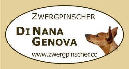 Zwergpinscher DiNana Genova