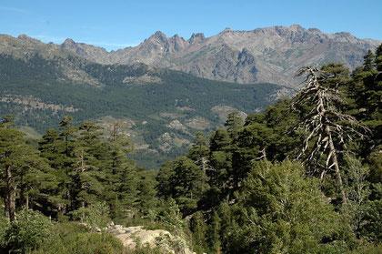 Massif du Rotundu - Haute Corse (20B) - juillet 2005