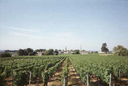 Vue sur le vignoble
