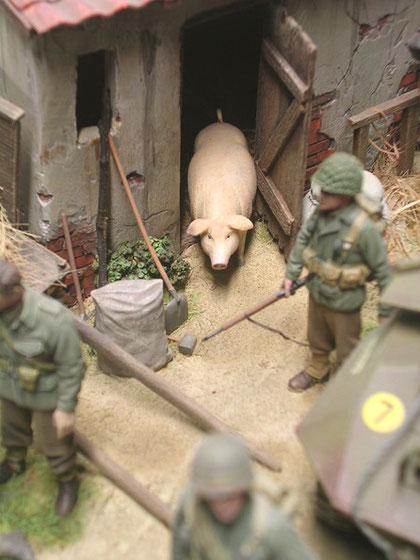 Schwein hat Schwein gehabt.