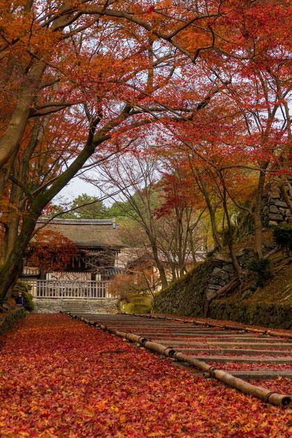 山科 毘沙門堂 敷き紅葉 階段
