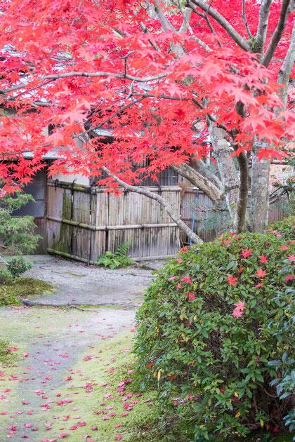 京都京田辺 一休寺の紅葉